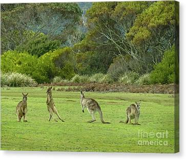 Tasmanian Sidestep Canvas Print by Teresa A and Preston S Cole Photography