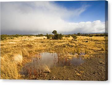 Tasmanian Storm  Canvas Print by Mike  Dawson