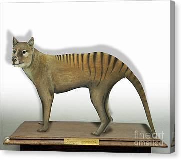 Tasmanian Tiger-thylacinus Cynocephalus-tasmanian Wolf-lobo De Tasmania-tasmanian Loup-beutelwolf    Canvas Print