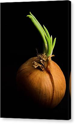 Tasty Onion Canvas Print by Thomas Splietker