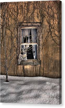 Tattered Curtain In Snow 2010 Canvas Print by Sari Sauls