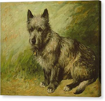 Mutt Canvas Print - Tatters by John Emms