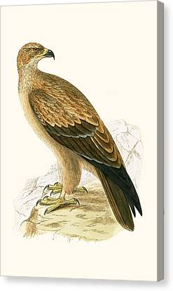 Tawny Eagle Canvas Print by English School