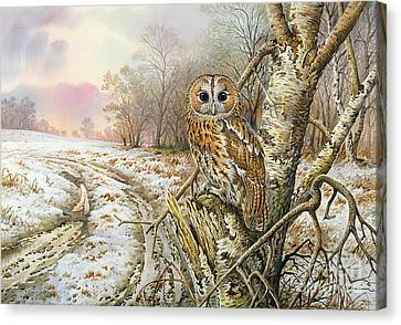 Tawny Owl Canvas Print by Carl Donner