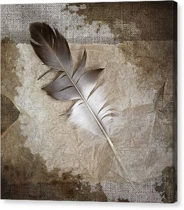 Tea Feather Canvas Print by Carol Leigh