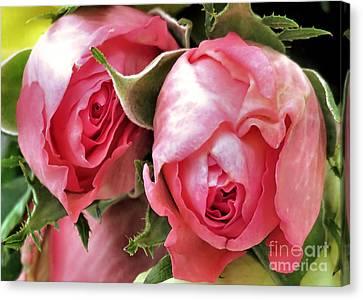 Tea Roses Canvas Print by Janice Drew