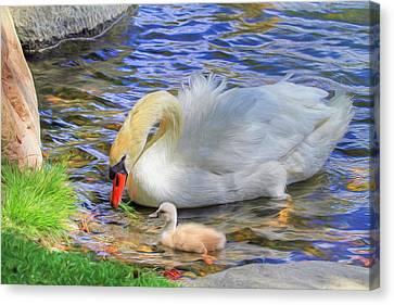 Swan Canvas Print - Teachings by Donna Kennedy
