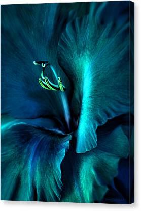 Teal Gladiola Flower Canvas Print by Jennie Marie Schell