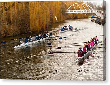 Teams Of Rowers On River Cam Canvas Print