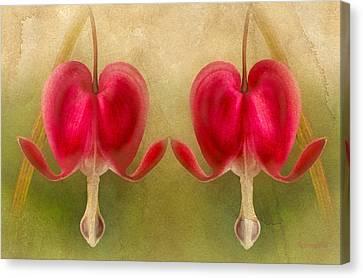 Teardrops Of The Heart Canvas Print by Georgiana Romanovna