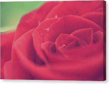 Tears Of Love Canvas Print by Laurie Search