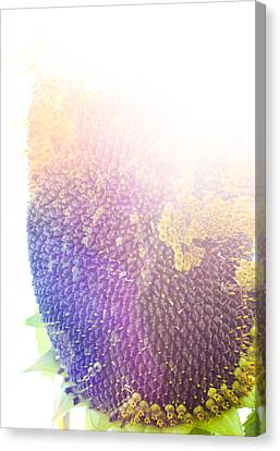 Technicolor Sunflower Canvas Print by Christi Kraft