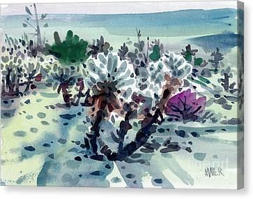 Cactus Watercolor Canvas Print - Teddy Bear Cactus by Donald Maier