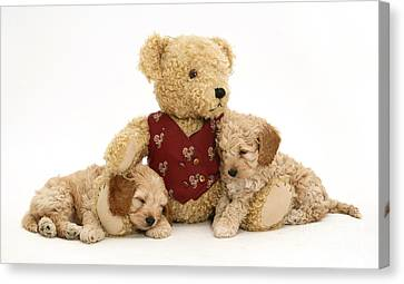Teddy Bear With Puppies Canvas Print by Jane Burton