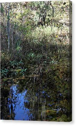 Teeming With Life Canvas Print by Suzanne Gaff