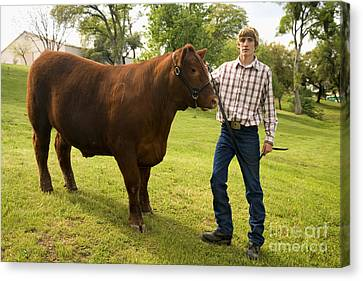 Angus Steer Canvas Print - Teen And Red Angus Steer by Inga Spence