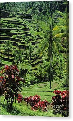 Tegalalang, Bali Canvas Print by William Waterfall - Printscapes