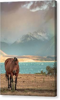 Tekapo Horse Canvas Print