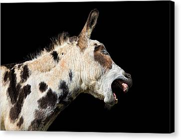 Canvas Print featuring the photograph Tell It Like It Is by Sharon Jones