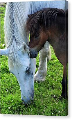 Canvas Print featuring the photograph Telling Secrets by Mike Martin
