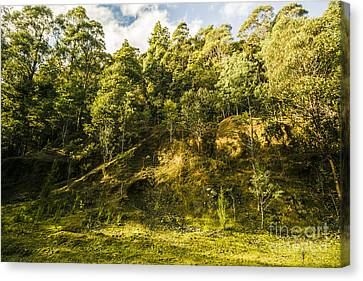 Temperate Rainforest Scene Canvas Print by Jorgo Photography - Wall Art Gallery