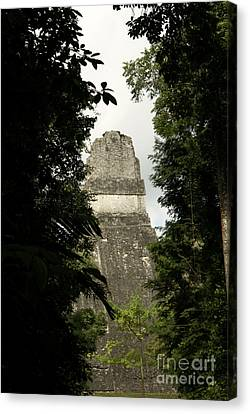 Temple In The Trees Tikal Guatemala Canvas Print by John  Mitchell