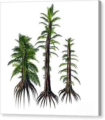 Tempskya Sp Trees Canvas Print