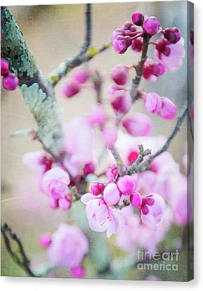 Canvas Print featuring the photograph Temptation Of Pink by Ivy Ho