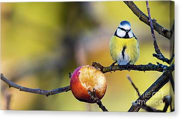 Canvas Print featuring the photograph Tempting by Torbjorn Swenelius