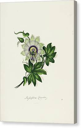 Ten Lithographic Coloured Flowers Canvas Print by MotionAge Designs