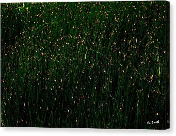 Ten Thousand Fire Flies Canvas Print by Ed Smith