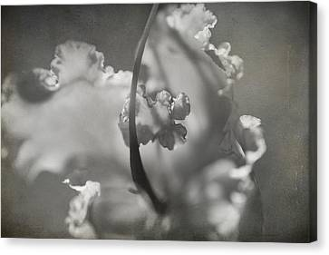 Stamen Canvas Print - Tenderness by Laurie Search