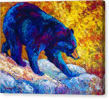 Tentative Step - Black Bear Canvas Print by Marion Rose