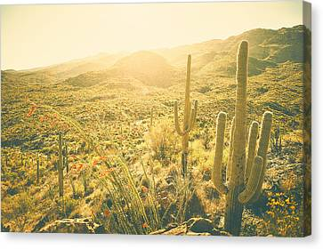 Tequila Sunrise Canvas Print
