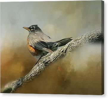 Teressia's Spring Robin  Canvas Print