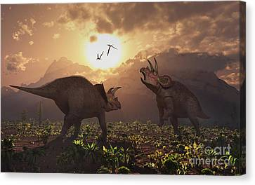 Four Animal Faces Canvas Print - Territorial Confrontation Between Two by Mark Stevenson