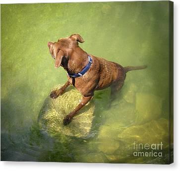 Dog Wading 3 Canvas Print