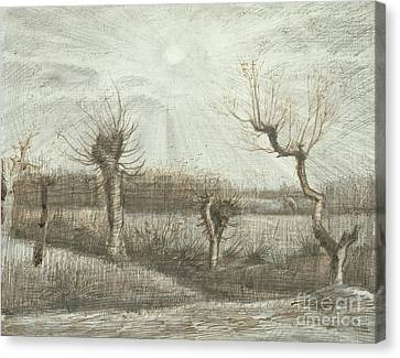 Tetards  Pollards Canvas Print