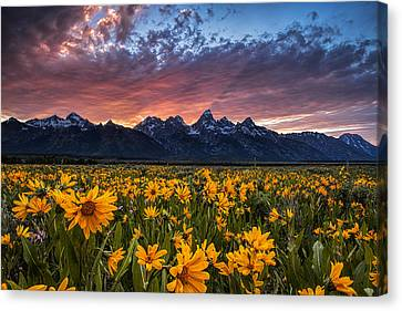 Tetons And Wildflowers At Sunset Canvas Print by Andrew Soundarajan