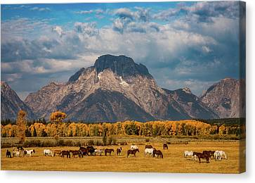 Canvas Print featuring the photograph Teton Horse Ranch by Darren White