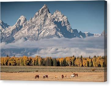 Teton Horses Canvas Print