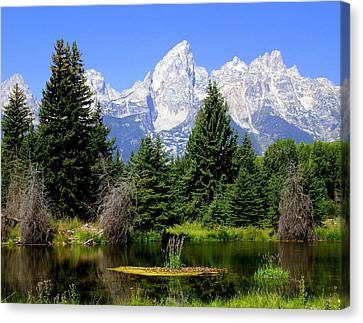 Tetons Canvas Print by Marty Koch