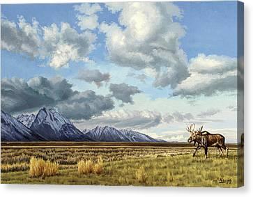 Tetons-moose Canvas Print by Paul Krapf