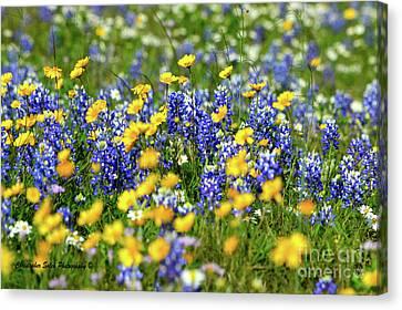 Texas Blue Bonnet  Canvas Print