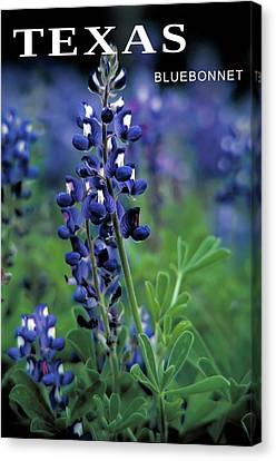 Canvas Print featuring the mixed media Texas Bluebonnet State Flower by Daniel Hagerman