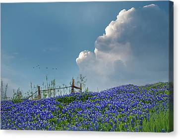 Canvas Print featuring the photograph Texas Bluebonnets And Spring Showers by David and Carol Kelly