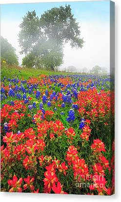 Texas Country Canvas Print by Inge Johnsson