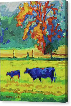 Texas Cow And Calf At Sunset Print Bertram Poole Canvas Print