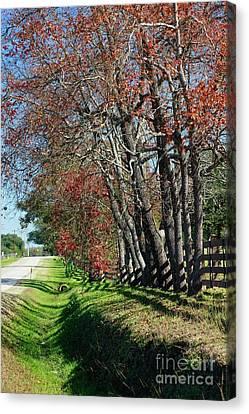Canvas Print featuring the photograph Texas Fall by Lori Mellen-Pagliaro