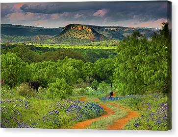 Texas Hill Country Ranch Road Canvas Print by Darryl Dalton